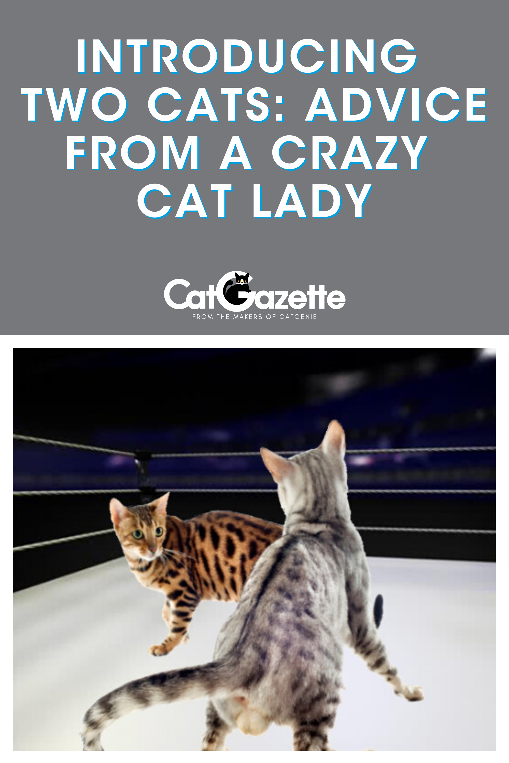 Introducing Two Cats Advice From A Crazy Cat Lady In 2020 Cat Parenting Cats Crazy Cats