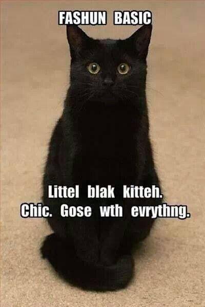 #blackkittychic #funny I like my black kitty!