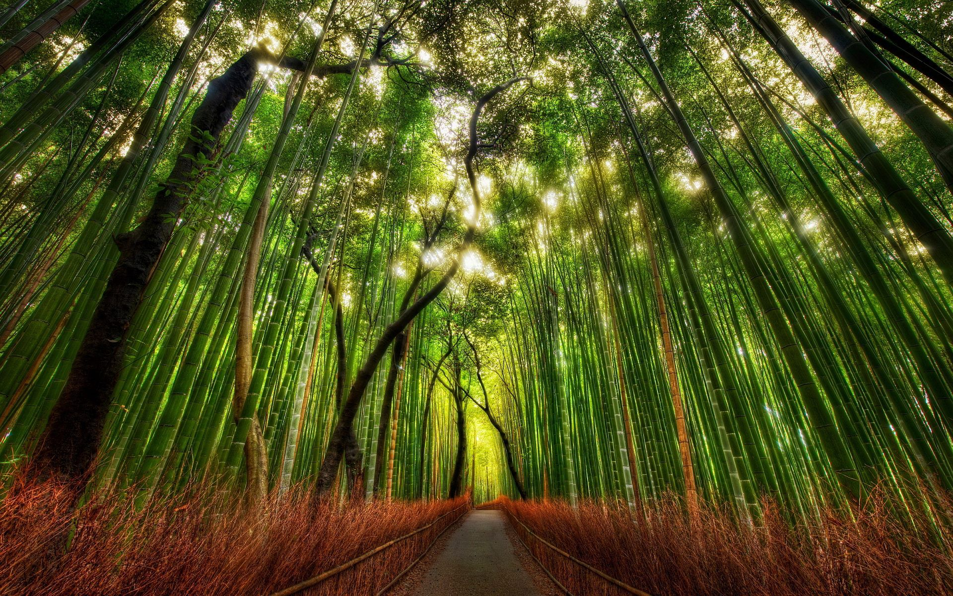 Bamboo Forest Kyoto Japan Hd Wallpaper Free Download Mural