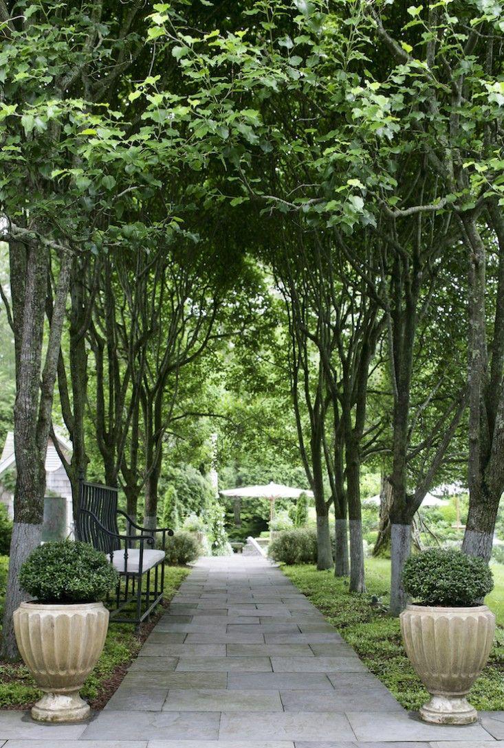 Beautiful An Allée From Charlotte Mossu0027s Garden Inspirations In Gardenista