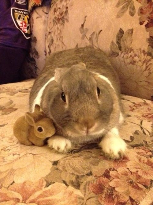animalhugs:  Aww. It's a bunny and it collects bunnies.