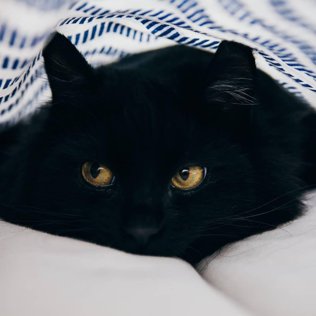 A Imagem Pode Conter Gato