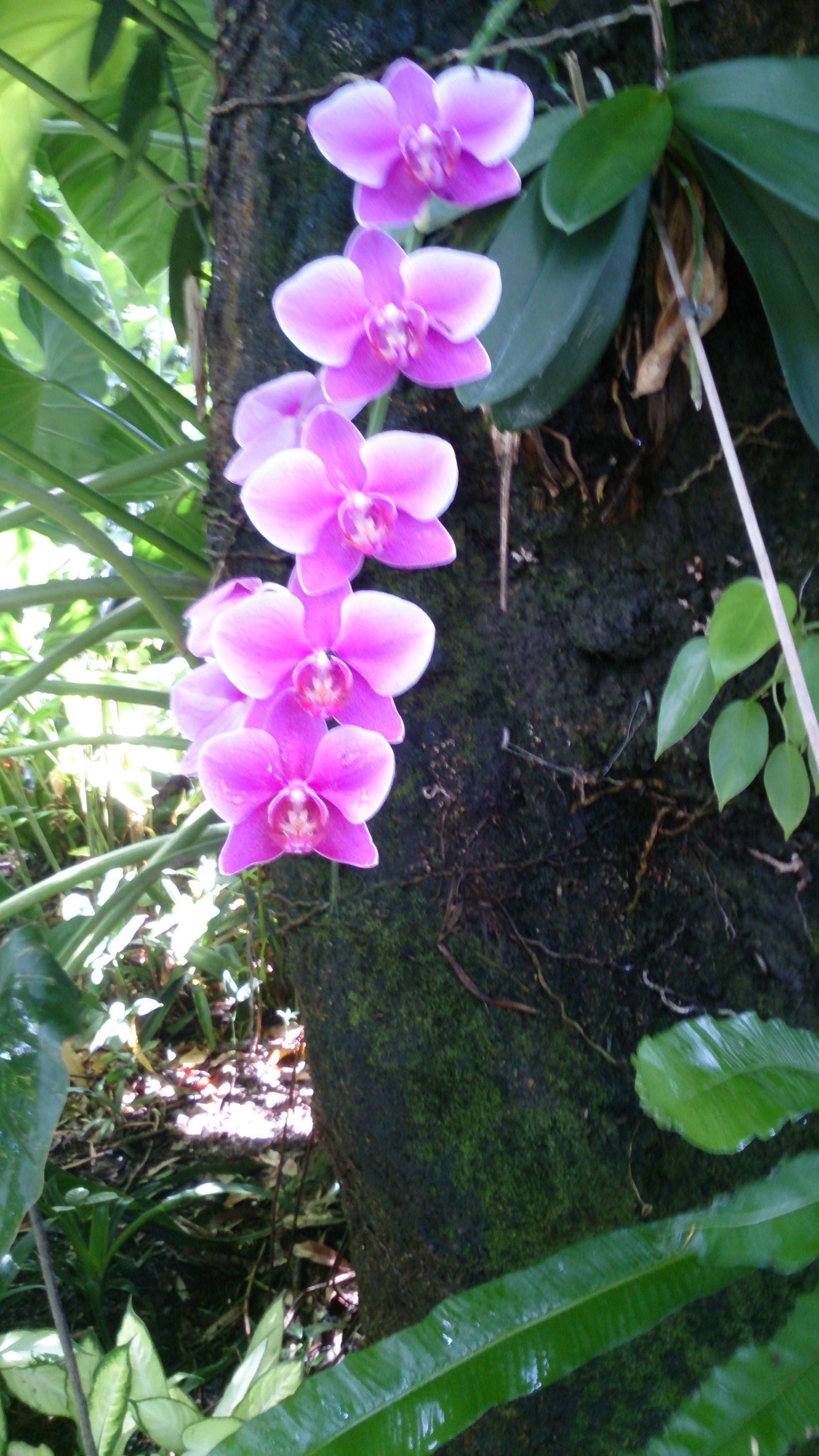 orchidées jardin botanique Deshaies jolies fleurs