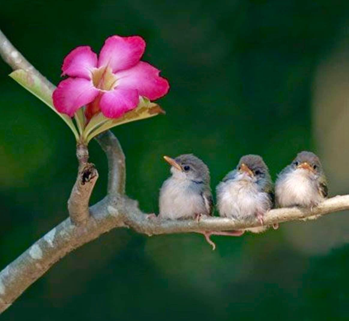 3 birds admiring a flower