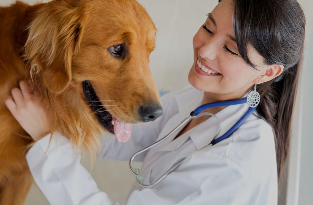 Georgesville Road Animal Hospital Columbus Ohio Grove City Hilliard Galloway West Jefferson Grandview Veteri Dog Health Giardia In Dogs Animal Hospital