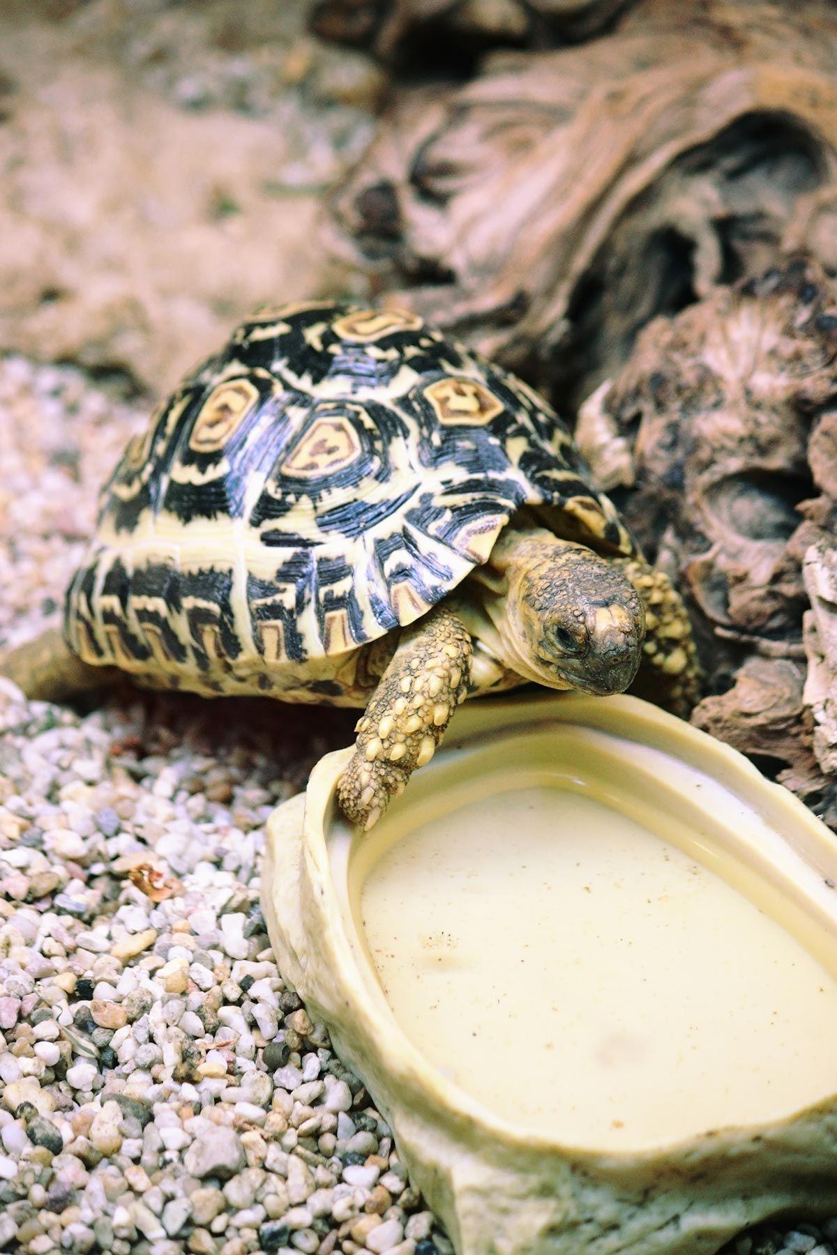 Tortugas Terrestres Tortugas Terrestres Tortugas Animales
