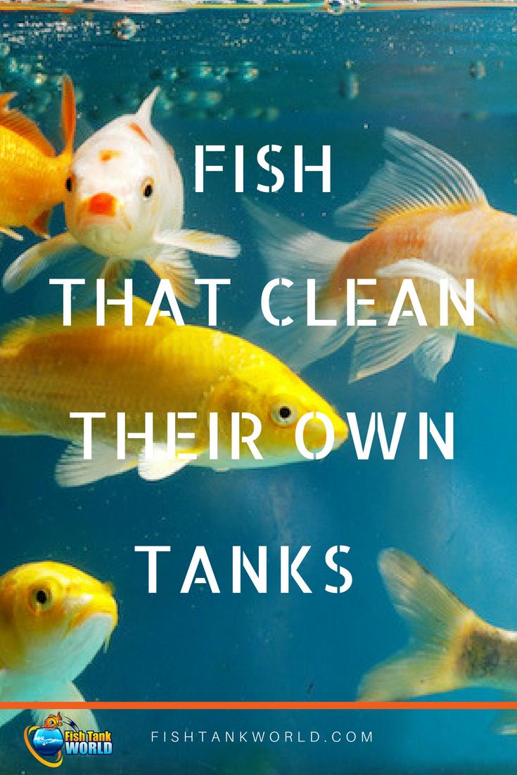 Algae Eaters 15 Fish Invertebrates To Help Keep Your Aquarium Clean Fish Tank Cleaning Cleaning Fish Aquarium Fish