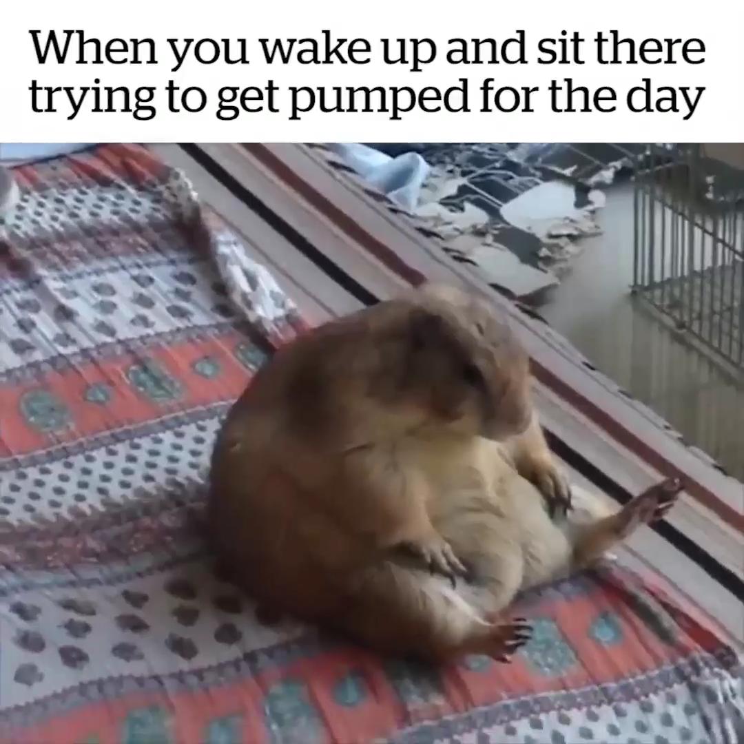 I Like Sitting All Day Funny Animal Memes Funny Animal Jokes Animal Jokes