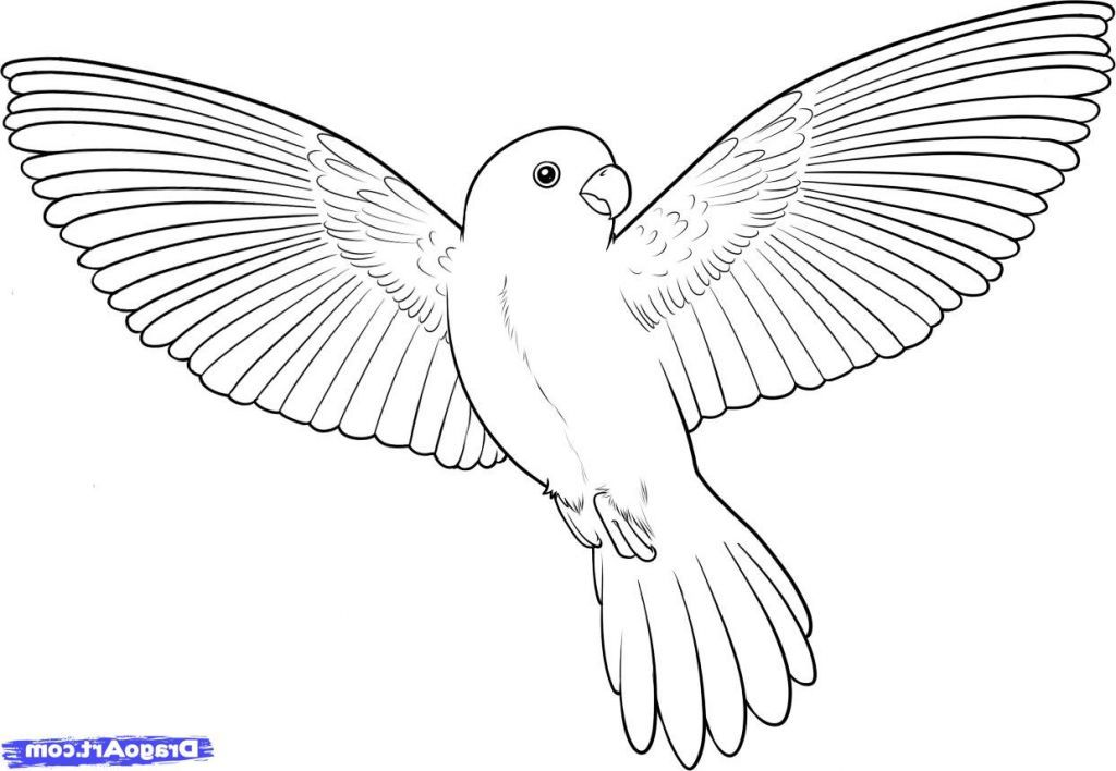 Drawing Flying Birds How To Draw A Flying Bird How To Draw A Bird
