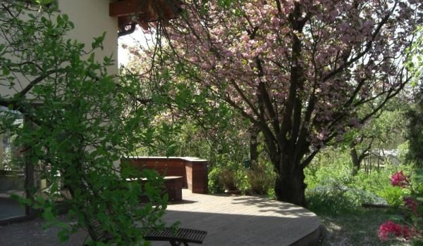 Unverwechselbar Bleibt Im Frühjahr Die Kirsche Mit Ihren Rosa Blüten