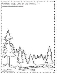 Woodland and Ocean Habitats Animal Sorting Worksheet / Activity