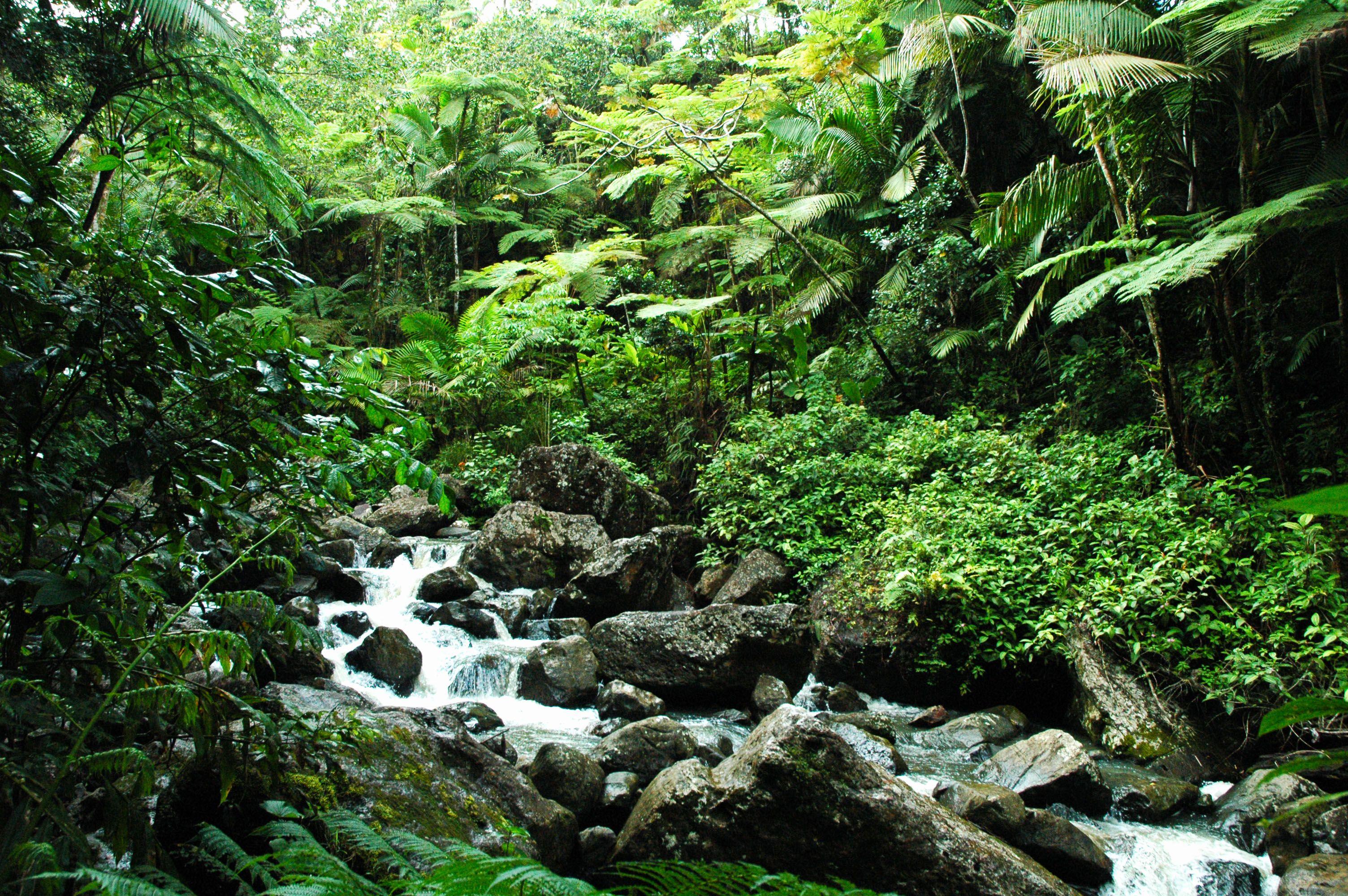 Dossier special no l la for t tropicale partie 2 un for Jardin foret