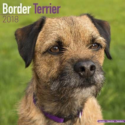 Avonside Hunde Kalender 2018 Avonside Hunde Wandkalender 2018 Border Terrier Hunde Hunderassen Border Terrier