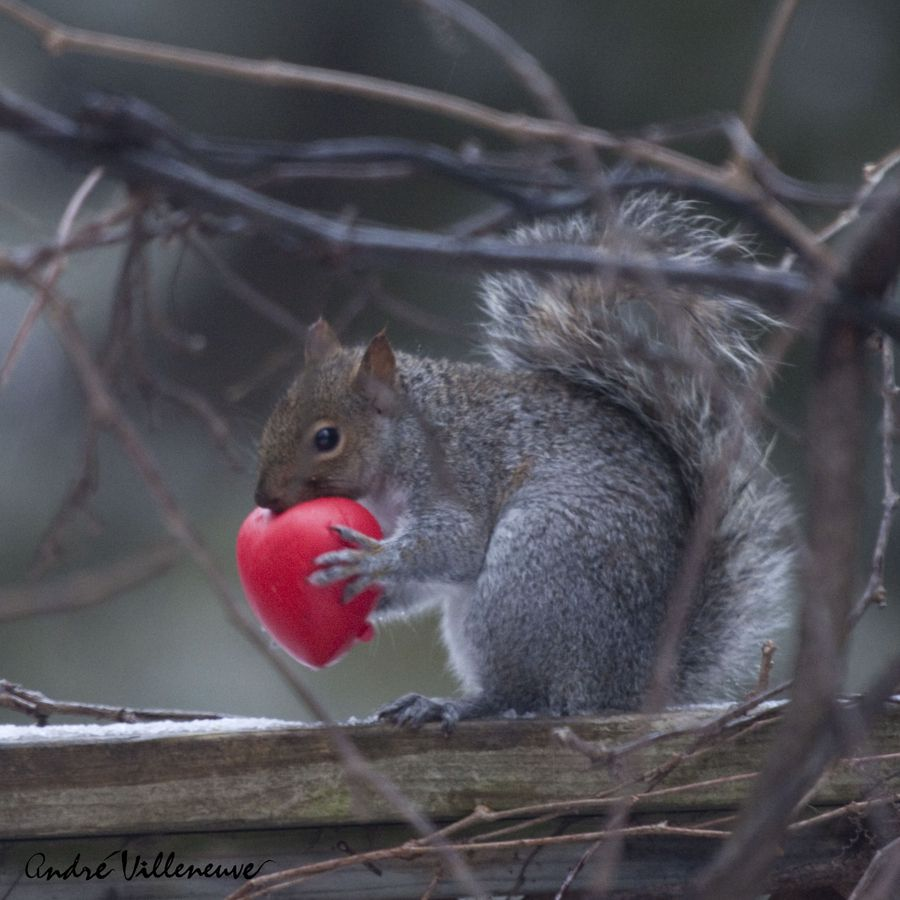 Holding the red by Andre Villeneuve, via 500px
