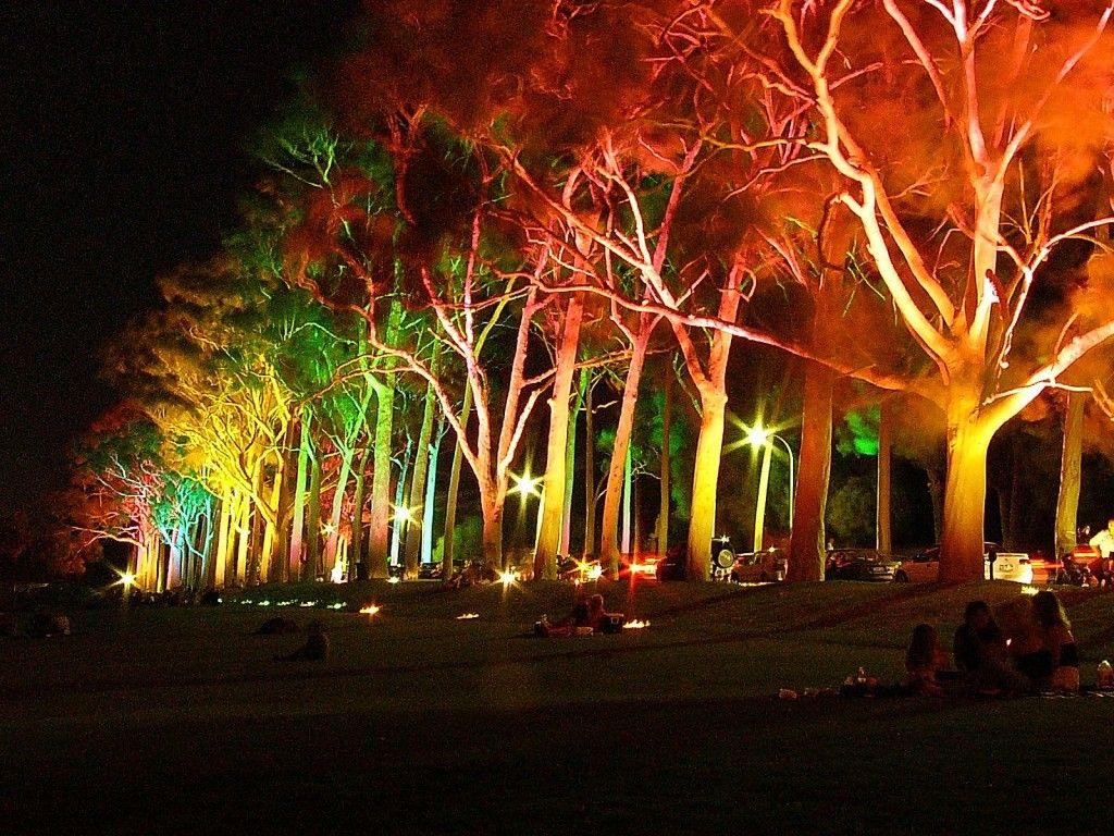 Landscape Lighting Ideas Trees Part - 18: Lighting Tree : Lighting.xcyyxh.com