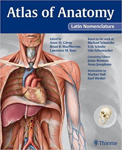 download atlas of anatomy latin nomenclature pdf - http, Muscles