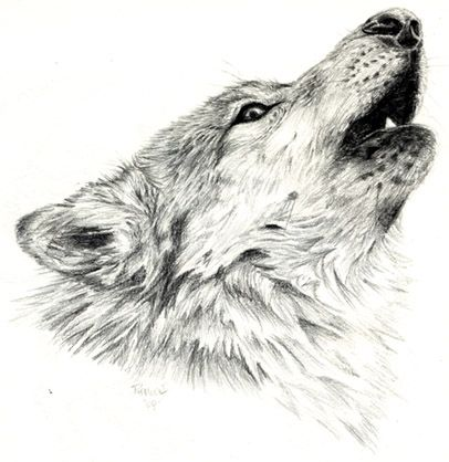 Go Back Gallery For Wolves Howling Drawings In Pencil Dessin
