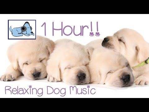 1 Hour of beautiful dog music to keep your pet calm during separation. - YouTube
