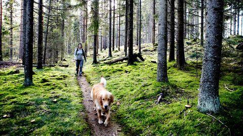 Diese Zwolf Regeln Von Martin Rutter Sollten Sie Beachten Wenn Sie Ihren Hund Ohne Leine Laufen Lassen Hunde Hund Lauft Hunde Erziehen
