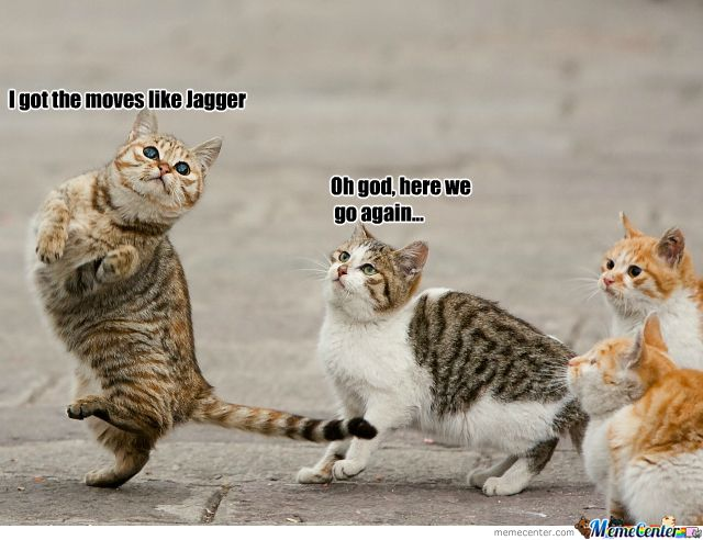 dance cat fever Cats Dancing animals, Dancing cat
