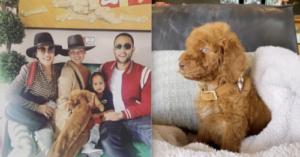 Chrissy Teigen And John Legend Adopt Rescue Puppy Thanks To Ellenadopt
