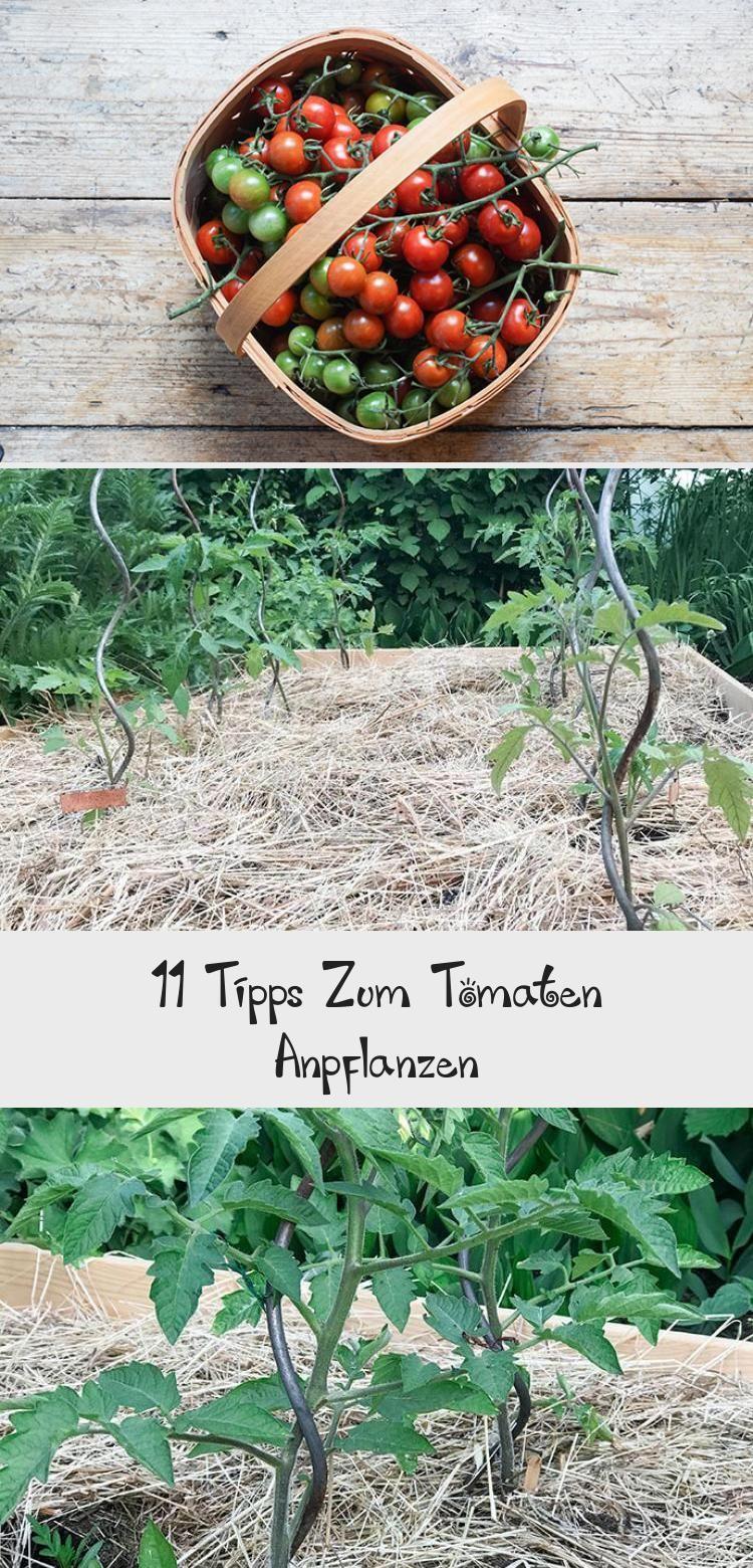 11 Tipps Zum Tomaten Anpflanzen Gartenblog Hauptstadtgarten Gemusegarten In 2020 Tomato Red Peppercorn Vegetables