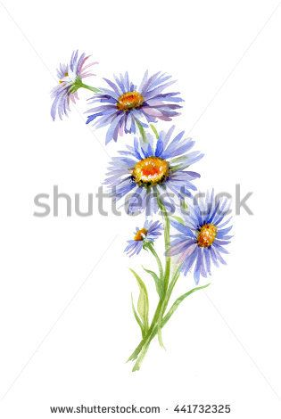 September Aster Watercolor Aster Tattoo Watercolor Tattoo Flower Birth Flower Tattoos