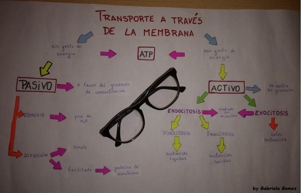 Transporte A Traves De La Membrana Activo Y Pasivo Proyectos De Biologia Celula Eucariota Clase De Biologia