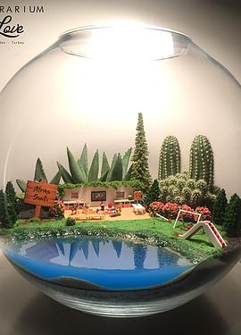 Mektebim Koleji Terrarium #succulentterrarium