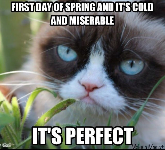 Tard you can say that again 9 inches of snow argh cats grumpy cat the first day of spring is normally cold and miserable get over it ccuart Image collections