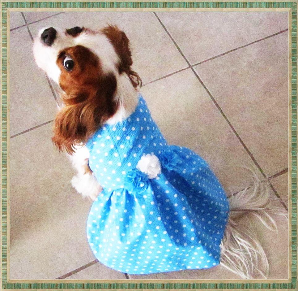 Should my dog NinSha be the ring bearer lol???   J&N Wedding ...