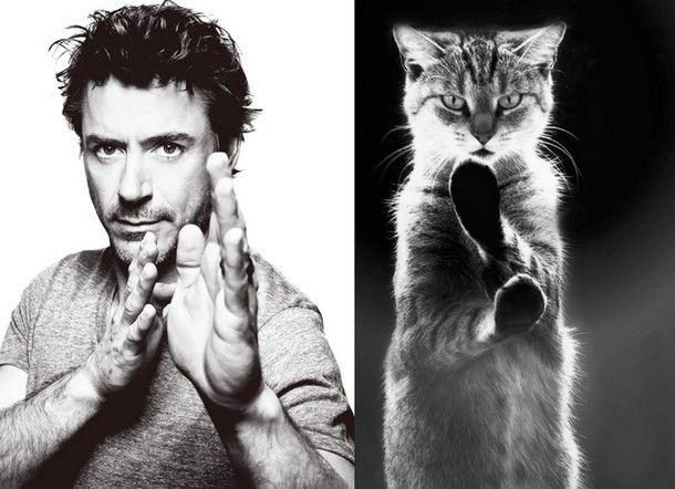 #cat #funny | Des #hommes et des #chatons