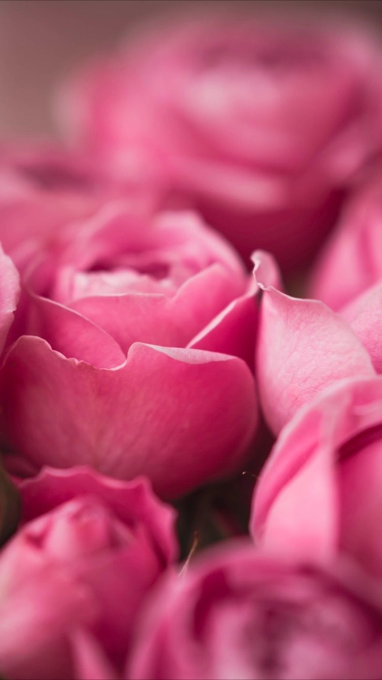 Beautiful Pink Wallpaper Flowers