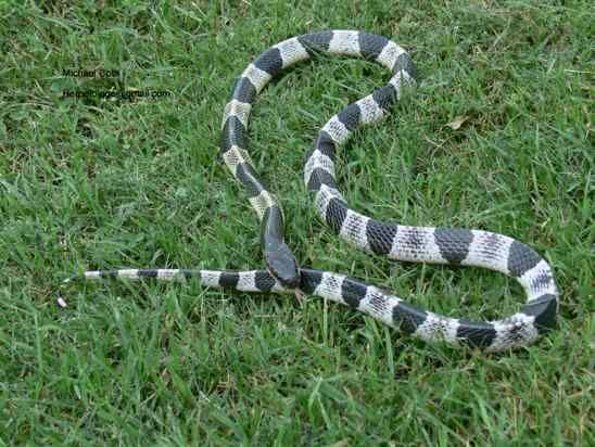Top 11 Deadliest And Most Poisonous Snakes In The World