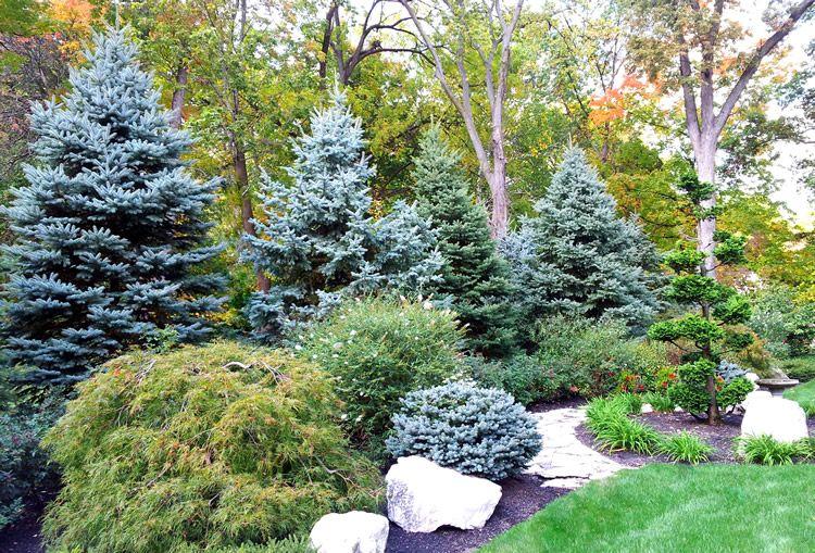 Privacy plantings. I wish this was my backyard. | Backyard ...