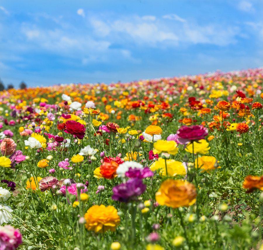 Photo Dream Field By T Dingle On 500px Pretty Plants Flower Garden Field