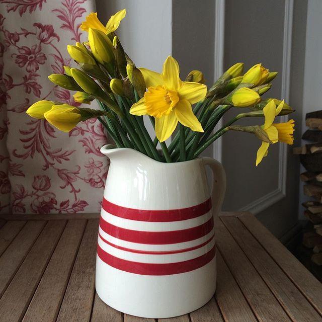 Cheery daffs. Can't beat 'em. #springflowers
