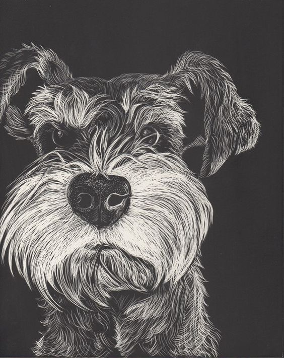 Miniature Schnauzers, as beautiful and stylish as they are