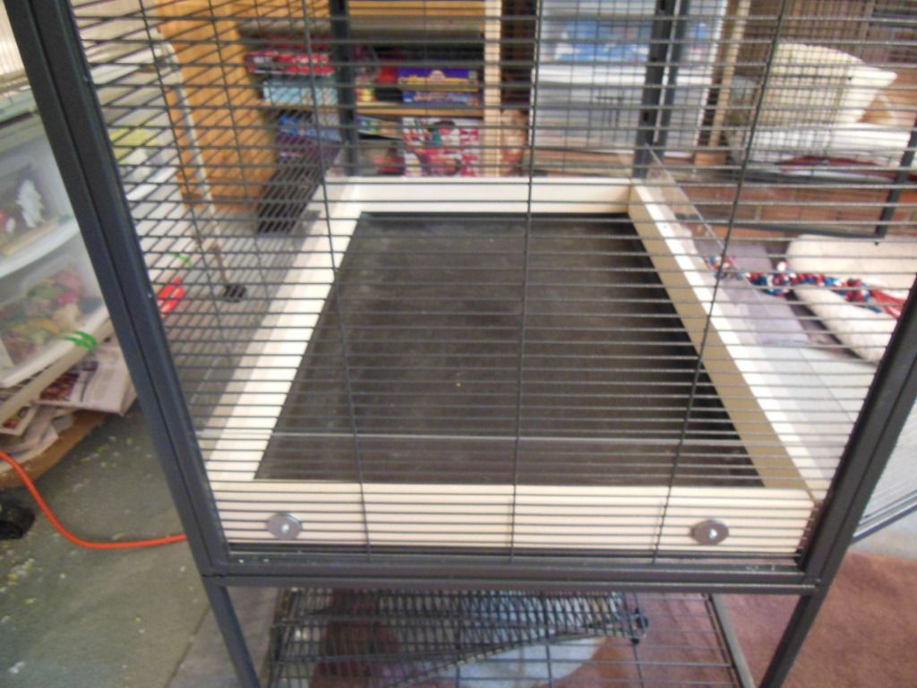 Paradise in a Critter Nation | Degu and Chinchilla World | Catio ...