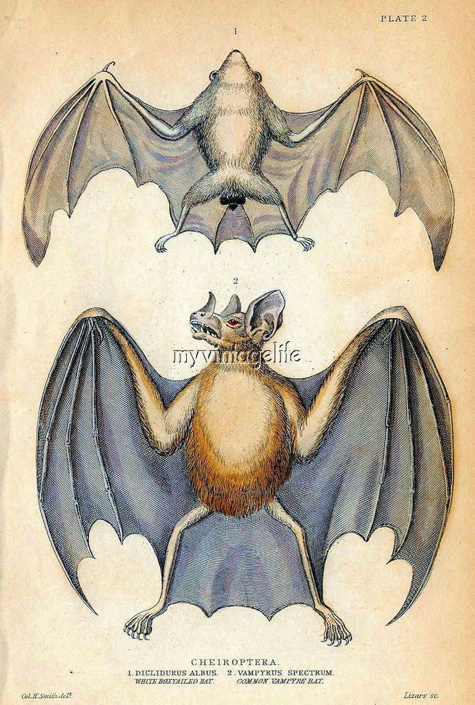 Details About Vintage Halloween Vampire Bat Quilting Fabric Block