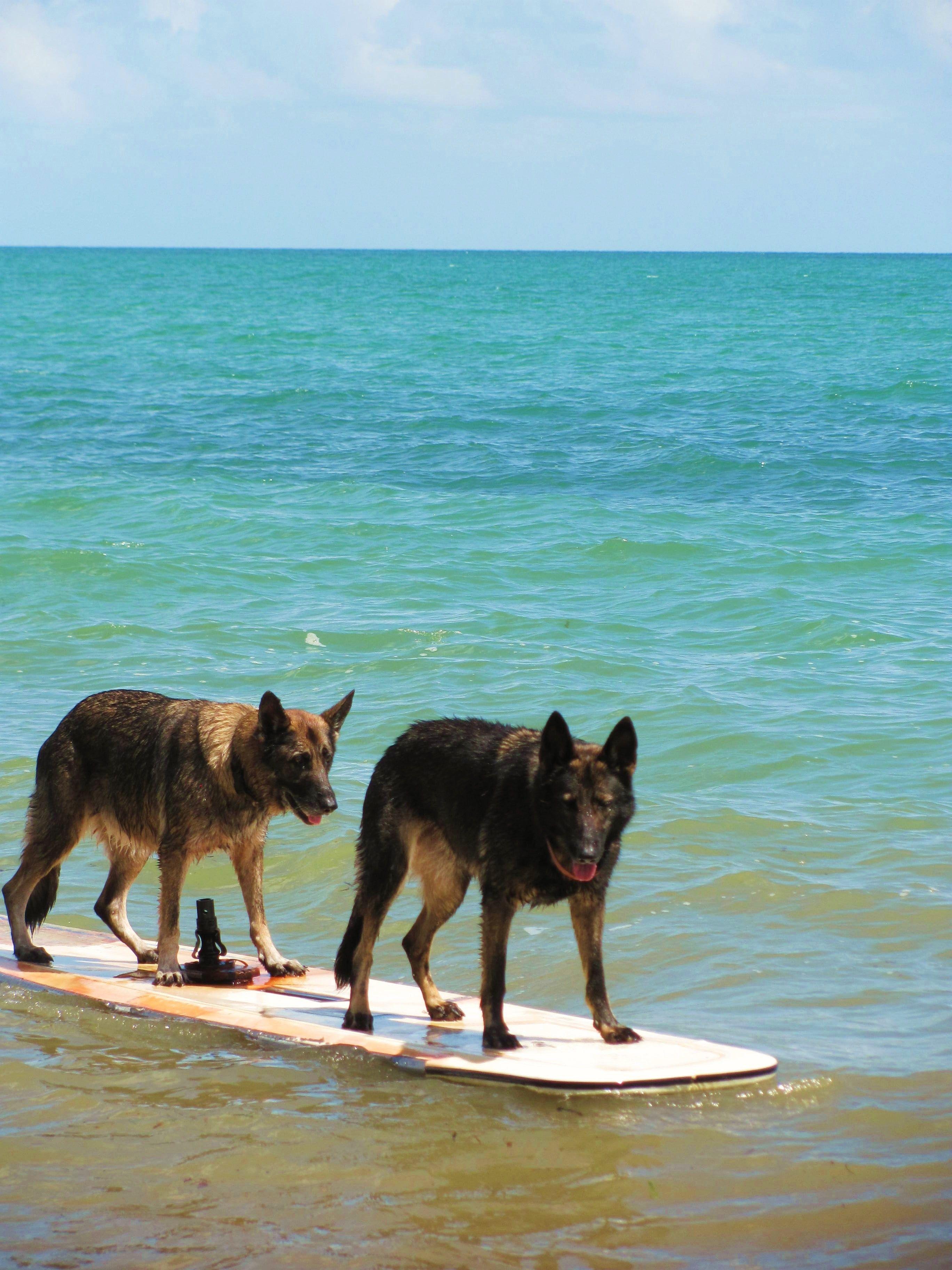 German Shepherds On The Most Beautiful Blue Water Dog Care 101 Best Dog Breeds Shepherd Dog