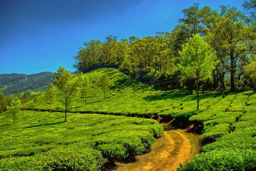 Tea plantations Munnar by Sreekumar Mahadevan Pillai on