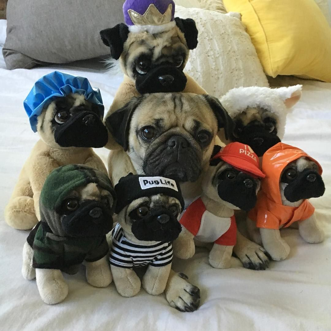 Now U Can Cuddle With Ur Own Doug The Pug Every Night Doug