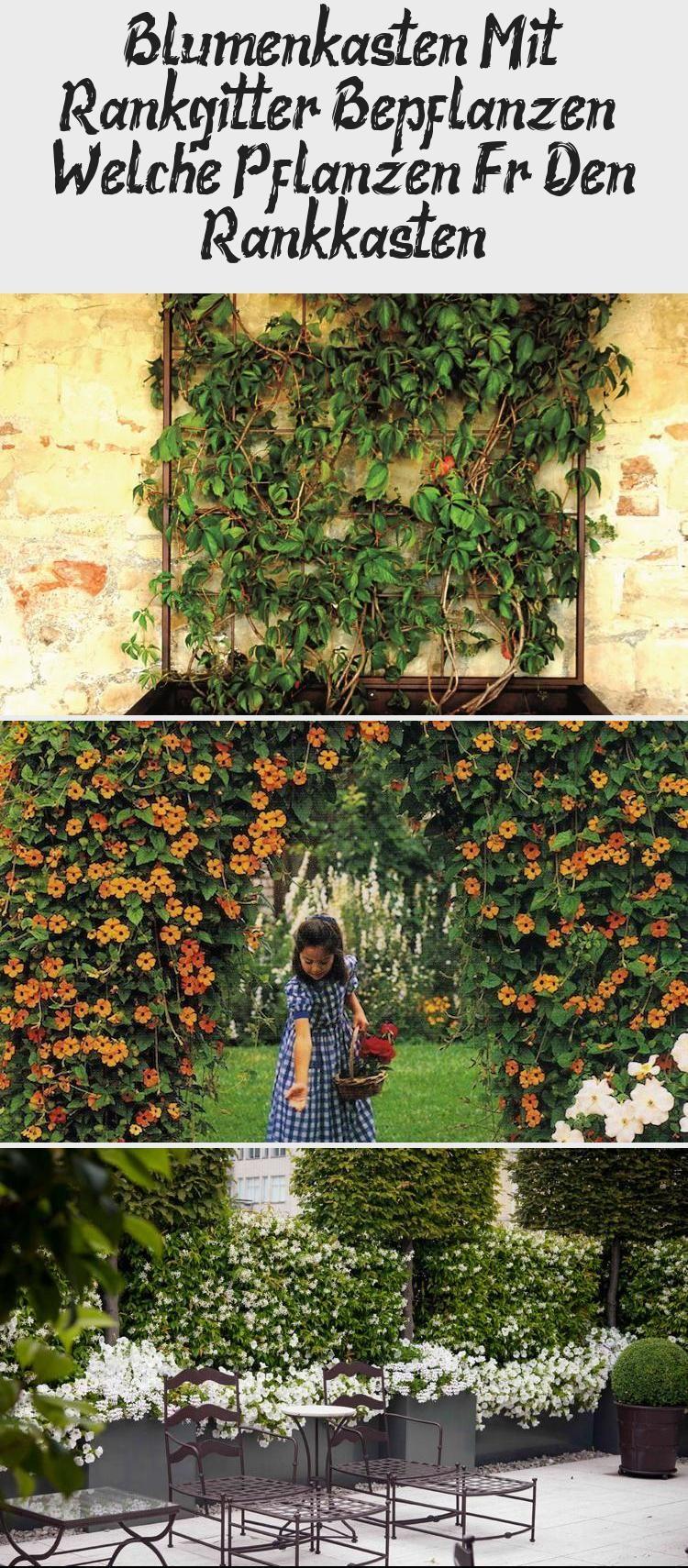 Blumenkasten Mit Rankgitter Bepflanzen Welche Pflanzen Fur Den