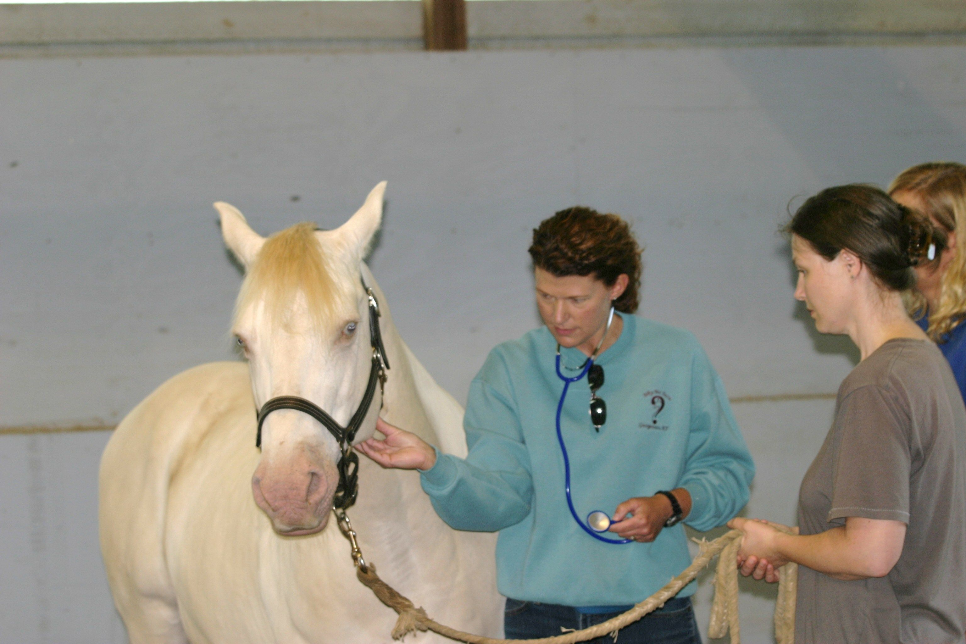 Research Horse Therapy Therapeutic Horseback Riding Equine Therapy