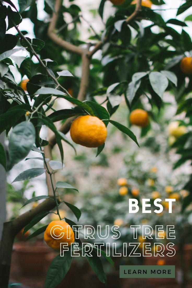 Best Fertilizers For Citrus Trees In 2021 Reviews And Buying Guide Citrus Trees Citrus Plant Citrus Tree Indoor