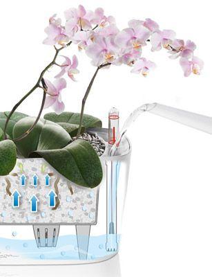 LECHUZA Pflanzgefäß DELTA 10 mit Erd-Bewässerungs-System | Orchideen ...