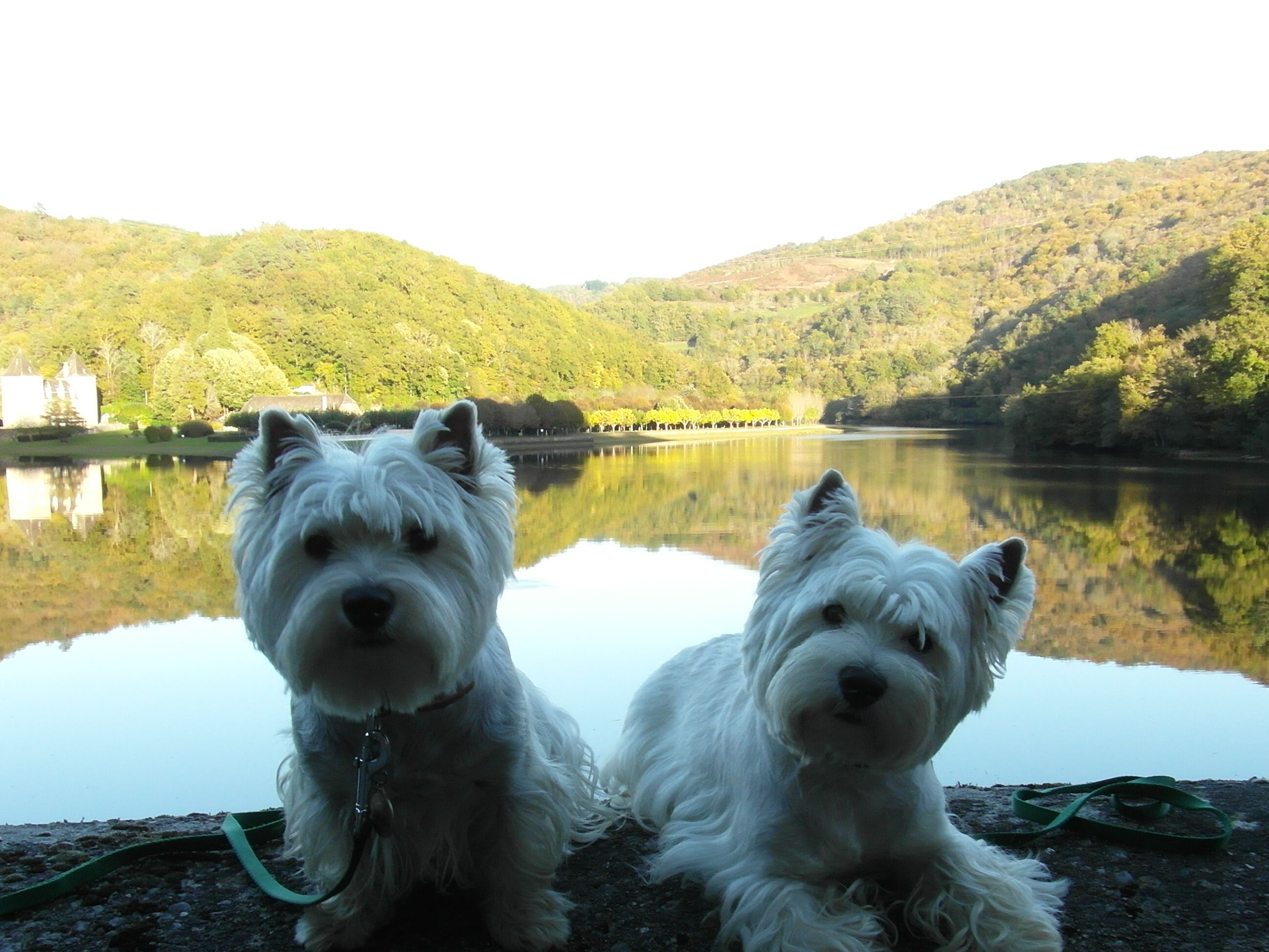 Noi 14 Cutest Dog Ever Dogs Westies