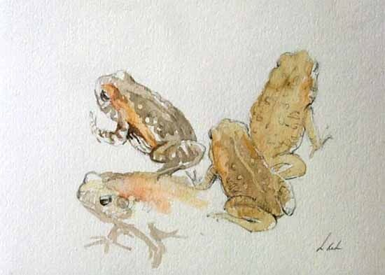 """""""Leaf Toad"""" Frog Art by Lucia deLeiris"""