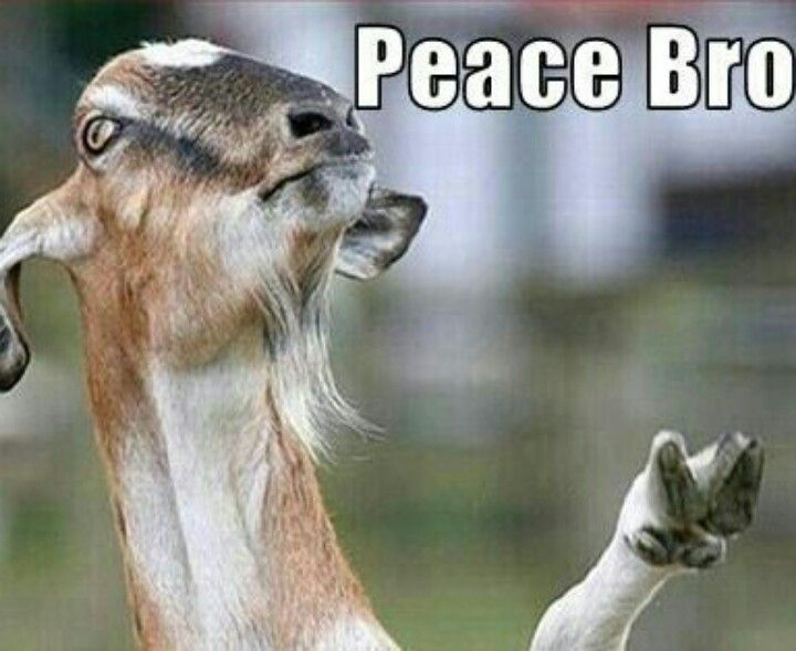Peace out bra | Lol | Funny goat memes, Goats, Animals